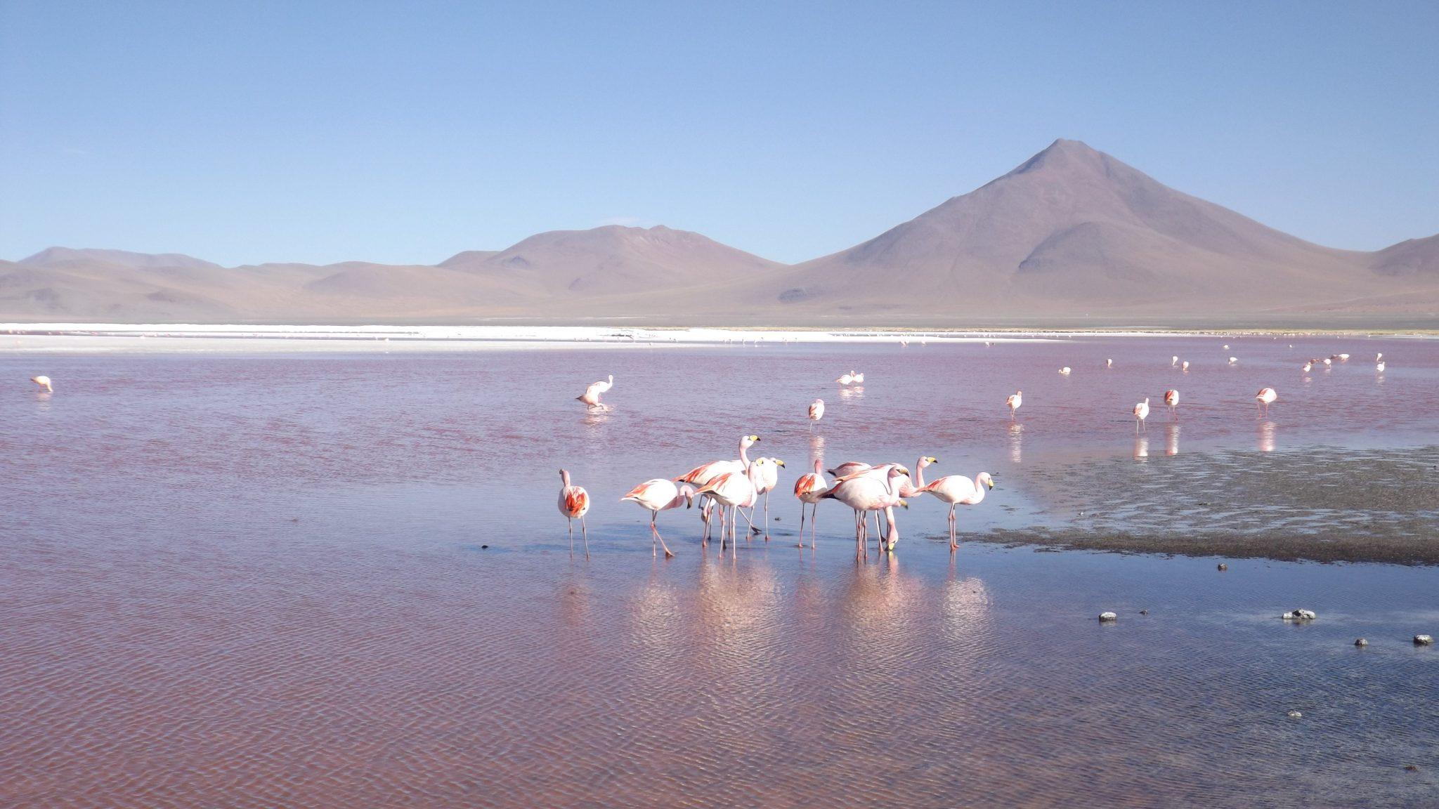 Img post laguna colorada1 Salar de Uyuni-Pasaporte y Millas