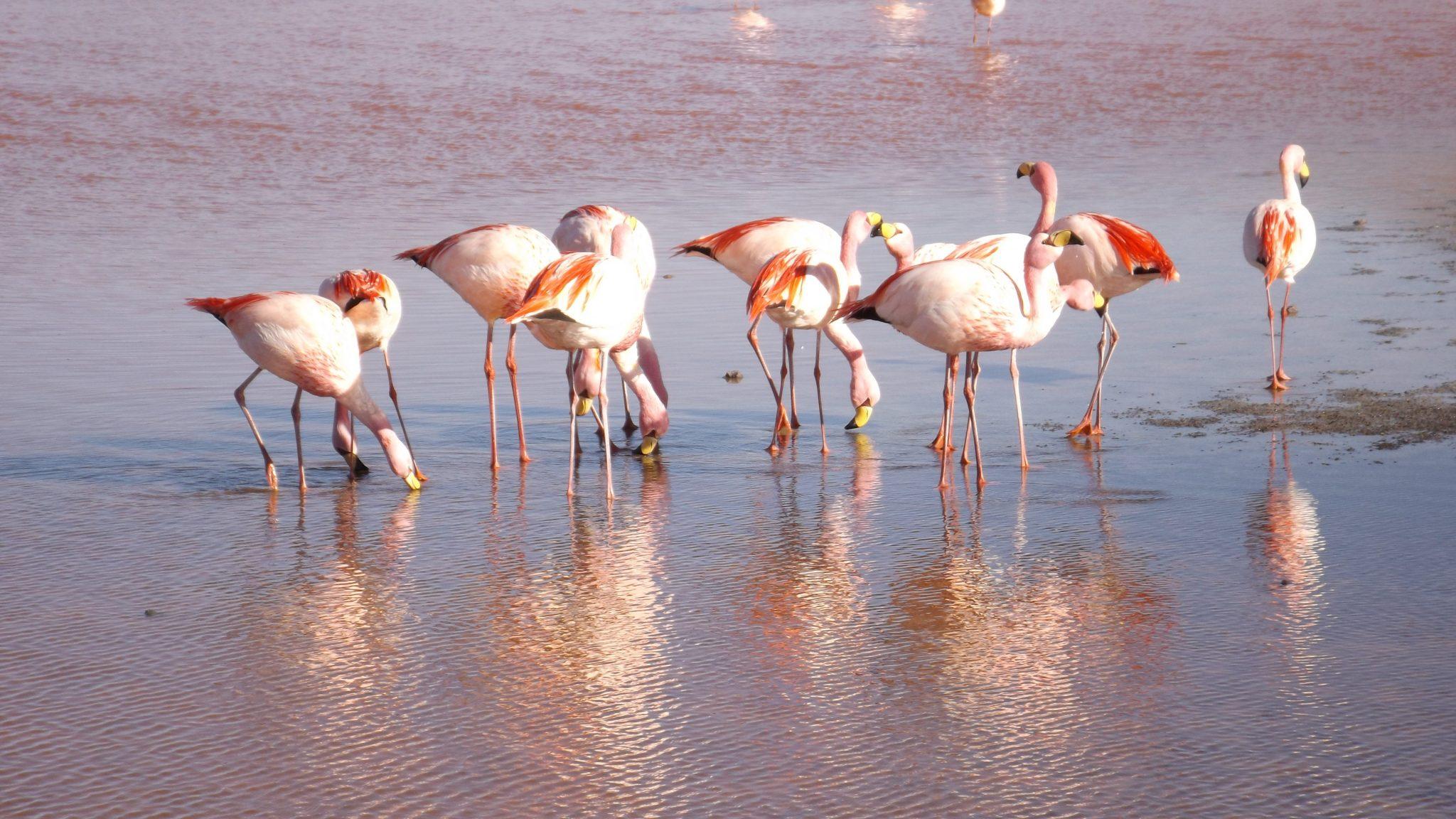 Img post laguna colorada 3 Salar de Uyuni-Pasaporte y Millas