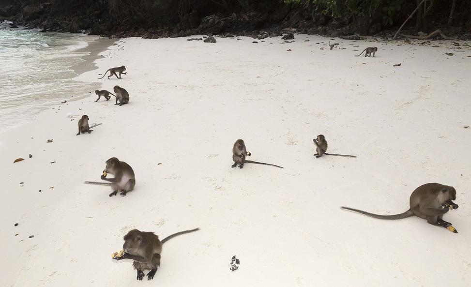 Img post Playa de los Monos. Tres días en Phi Phi - Pasaporte y Millas