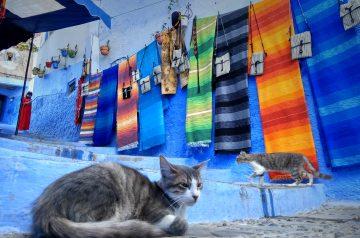 Img post Qué saber antes de viajar a Marruecos- Pasaporte y Millas